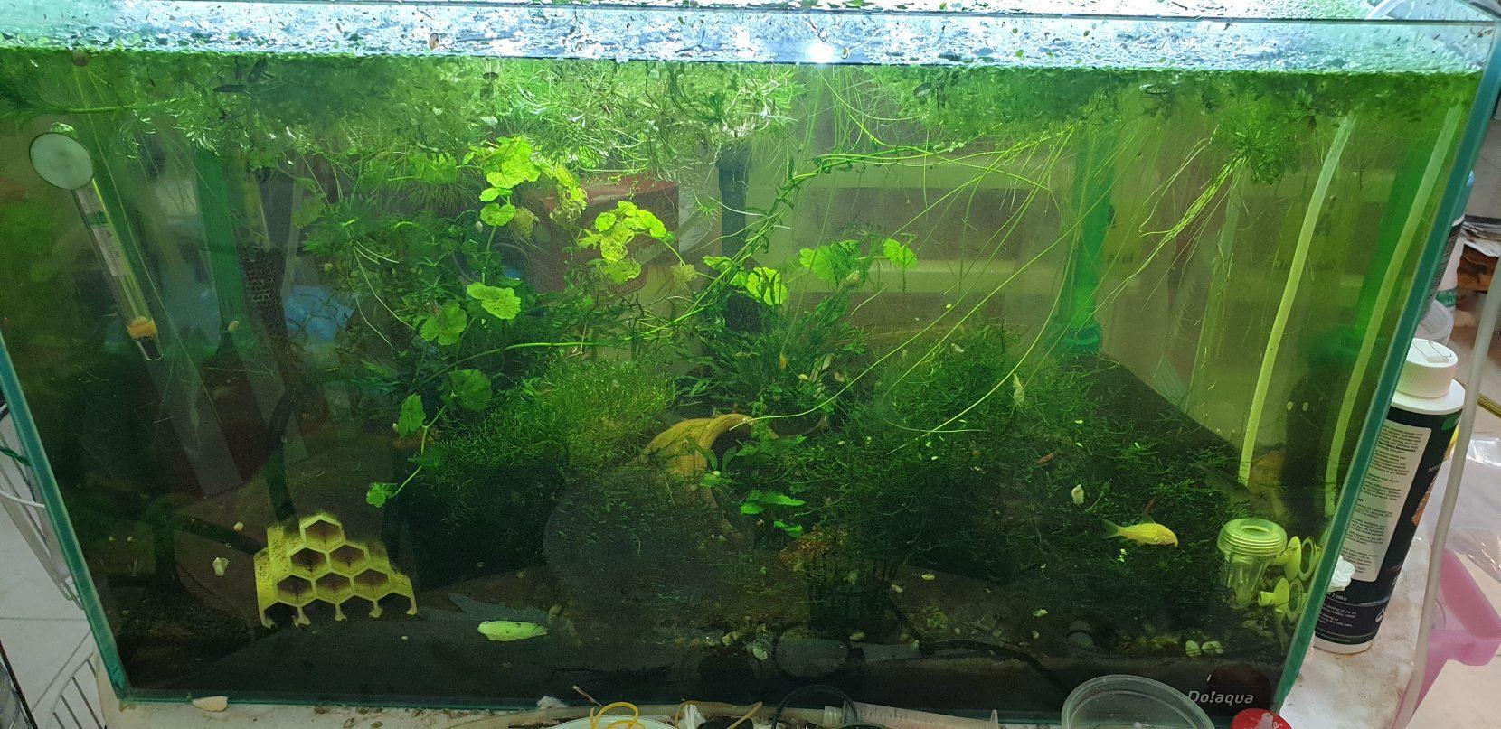 حوض سمك نهري