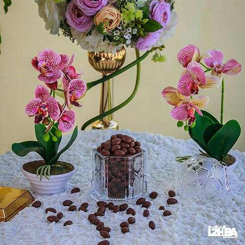 Drega Nuts Hazelnut